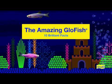 The Amazing GloFish® — 10 Brilliant Facts From Tetra®