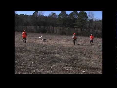 Alabama Quail Hunt with Mark Mathias & Bob Redfern| Great Southern Outdoors