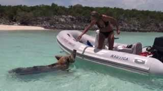 Swimming with pigs in Big Major Cay, Exumas, Bahamas - Video