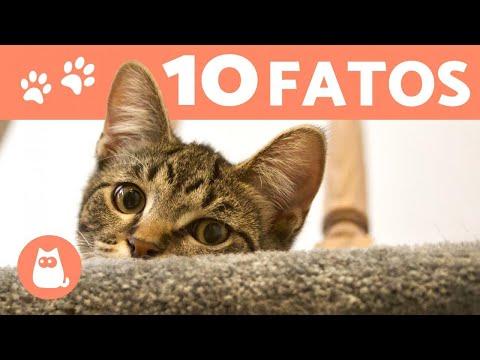 10 CURIOSIDADES Sobre GATOS Que Você Precisa Conhecer!