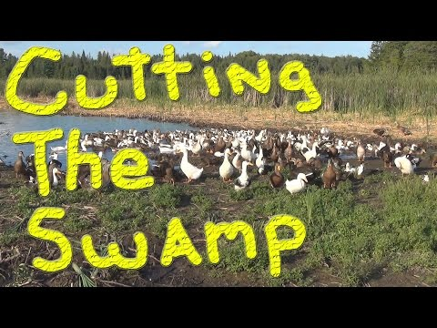 Rebel Ducks Again… #125 Ducks For The Homeless