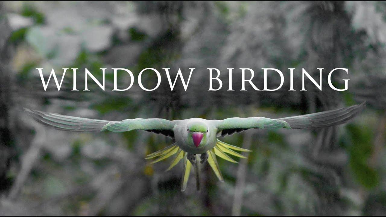 WINDOW BIRDING
