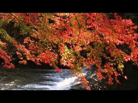 京都 八瀬の紅葉 Yase district in autumn, Kyoto(2014-11)