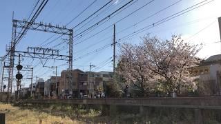 南海31000系 モハ31002 桜花と8両「りんかん」 2019