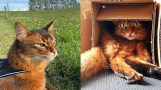 SOMALI CATS 2021