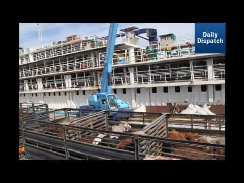 EL activists condemn shipping of livestock to Mauritius