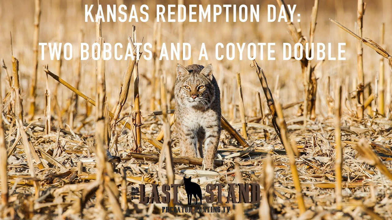 Kansas Redemption Day: Two Bobcats and a Coyote Double | The Last Stand  S3:E6 | December in Kansas