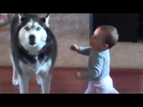 Bimbo parla con il suo cane, incredibile!!!