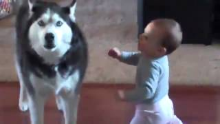 赤ちゃんと犬が会話をしている証拠映像を入手
