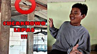 Download #Caramengatasi #cucakrowolepas BURUNG CUCAKROWO LEPAS!!!  | TIPS MENANGKAP BURUNG YANG LEPAS