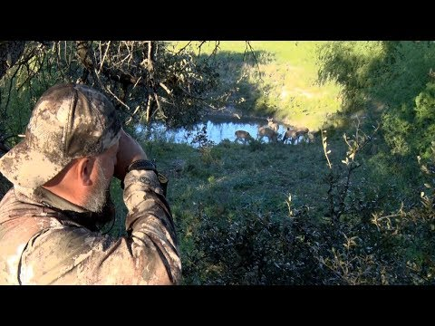 Bow Hunting For Whitetail Deer