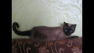 ЛУЧШИЕ КЛИЧКИ ИМЕНА ДЛЯ КОТОВ КОШЕК /Как назвать кота и кошку/САМЫЕ КРАСИВЫЕ КЛИЧКИ ИМЕНА ДЛЯ РЫЖИХ
