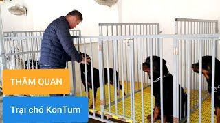 Đến thăm trại chó giống tại Koฑtum nuôi chó Rottweiler