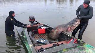 ТОП 5 Подводная охота Маточное поголовье