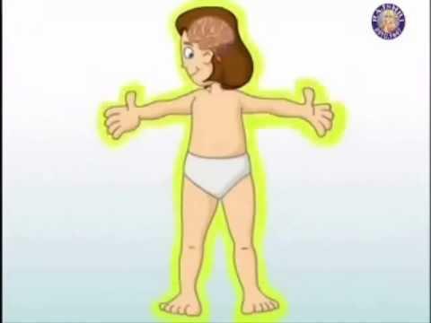Los órganos Internos Del Cuerpo Humano Youtube