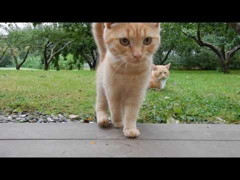 cats kingdom - part 2