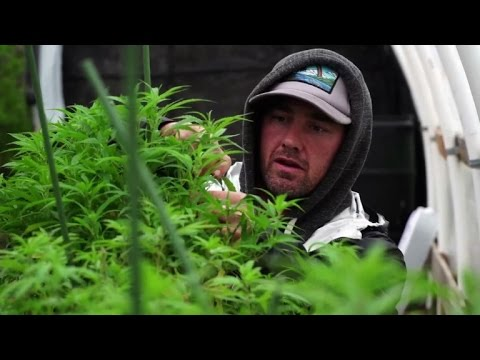 All-cash business a headache for the marijuana industry