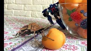 Нашествие  насекомых.  Образовательное видео для детей Insect invasion. Box of toys insects.