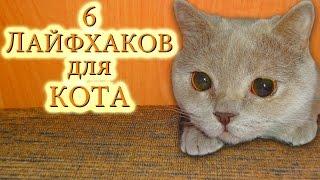 Лайфхаки для котов и кошек