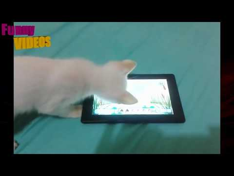 Funny videos 2017 - Funny fails, Funny animals, Funny dogs and cats, Pranks Try not to laugh 2017