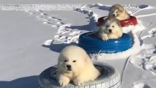 Dogs funny videos