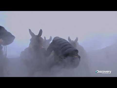 В поисках сокровищ: змеиный остров (сезон 2, серия 8) - Оползень