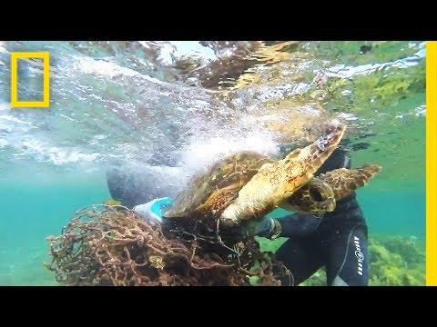 Tangled In Fishing Net | Sea Turtle Rescue