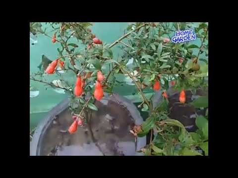 Neem's medicinal benefits // Benefits of eating neem leaves