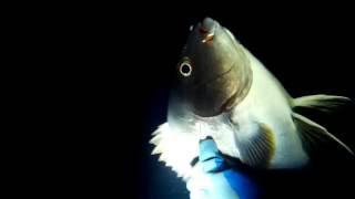素潜り漁.