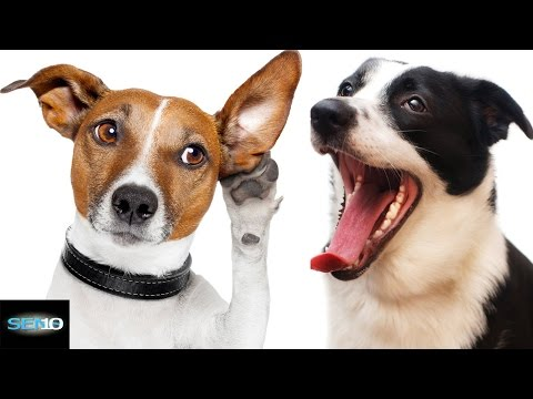 10 Things You DIDN'T KNOW About Your DOG | Top 5 Countdown