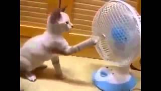 Смешное видео с домашними животными