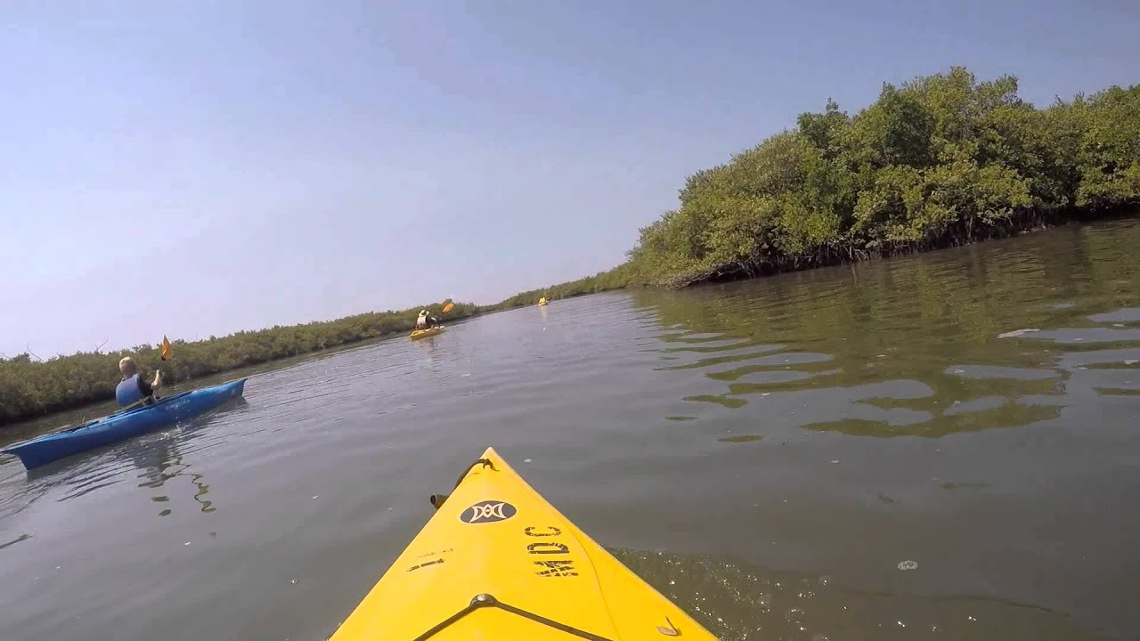 Guided Kayak Ecotour Marine Discovery Center New Smyrna Beach