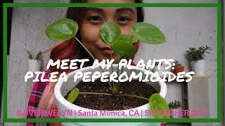 Meet my plants: Pilea Peperomioides   ILOVEJEWELYN