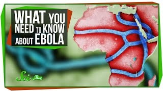 What You Need to Know About Ebola