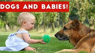 Cutest Dogs & Adorable Baby Video Compilation October 2016 | Funny Pet Videos
