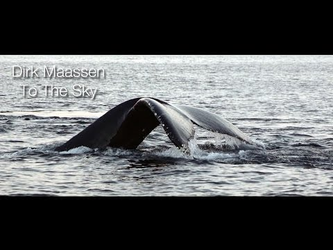 Absolutely Wonderful Piano Piece - Dirk Maassen - To The Sky (featured on Whales at Senja, Norway)