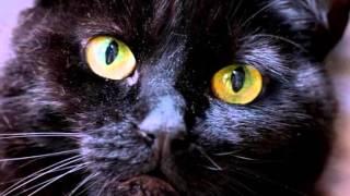 Alibabki - Czarny kot