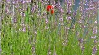 Gartenwelten Forchheim | Werbeagentur Oino