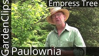 Empress Tree - Paulownia tomentosa - How to grow Royal Empress Tree