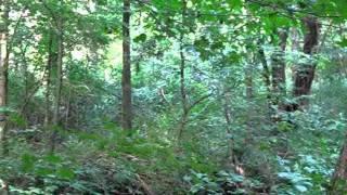 sasquatch research 16 hiding in plain sight
