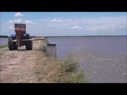 Pacu and rice rotary farming in Argentine