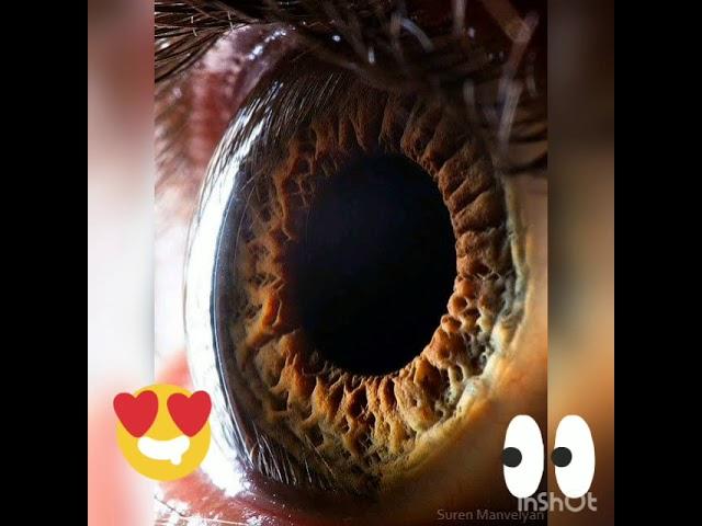 Aula 1: Olhos e visão