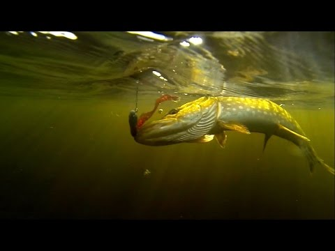 GoPro: Early Spring Pike On JerkBaits  (Mason Nist)