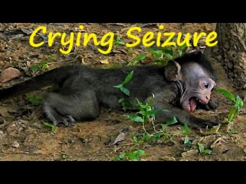 TOP CRY NONE-STOP, Baby Gino Crying Seizure Rolling on the ground, Real Wonder sound of Gino Crying
