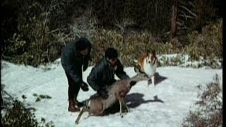 "Lassie - Episode #514 - ""The Chase"" – Season 16, Ep. 11 - 12/14/1969"