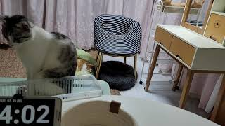 [고양이] 그리고 마늘까기 #14