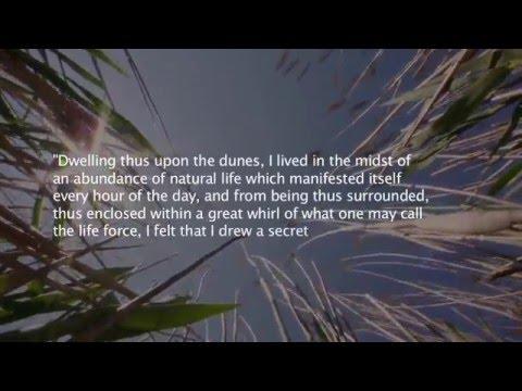 Henry Beston Documentary HD Footage Sample #1