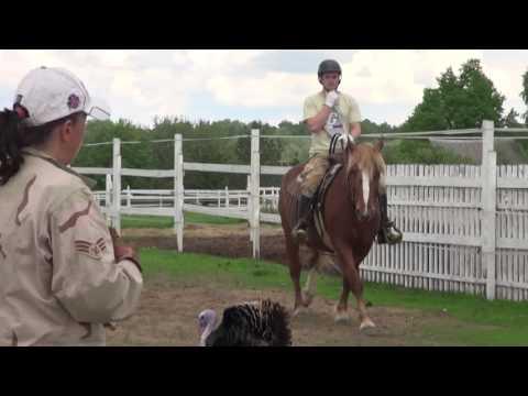 Верховая езда - обучение, коррекция баланса