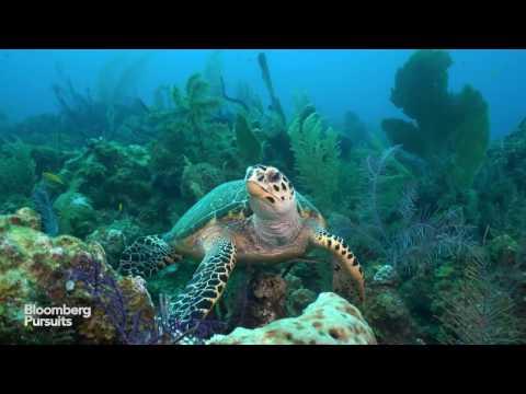 Cuba's Secret Scuba Dive Site Is One Of A Kind