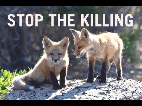 Help Stop the Wildlife Killing Agency